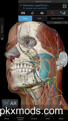 Human Anatomy Atlas 2020 v2020.0.69